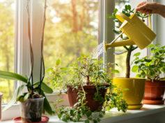 curs_jardineria_plantes_interior_golferichs